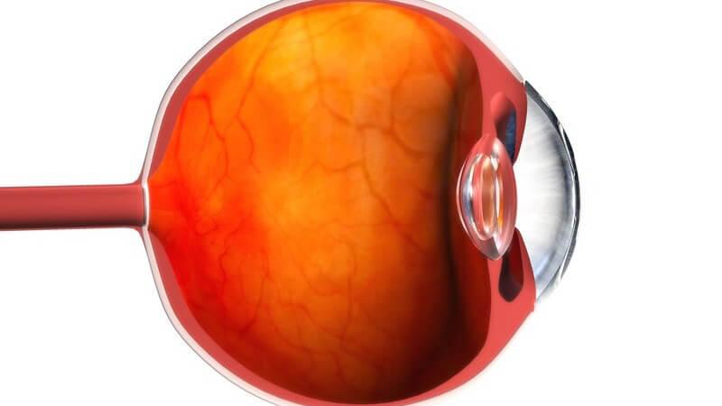 Anatomie - Grafik des menschlichen Auges - Ansicht von der Seite