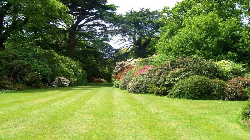 Wiese in großem Garten mit vielen Bäumen und Sträuchern