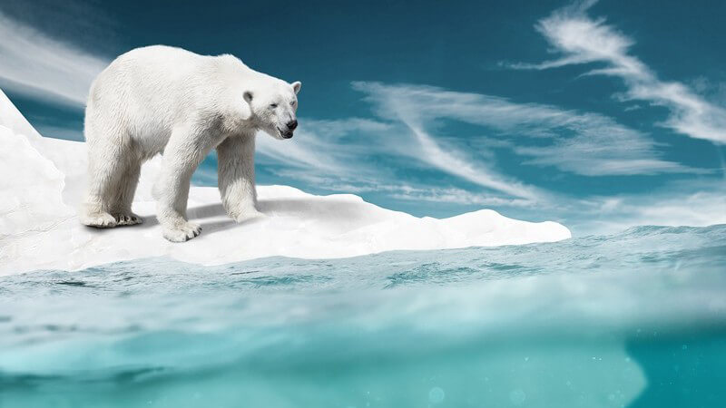 Eisbär auf schwimmender Eisscholle