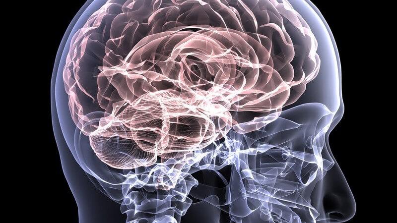 Grafik eines Röntgenbilds des menschlichen Schädels mit hervorgehobenem Gehirn auf schwarzem Hintergrund