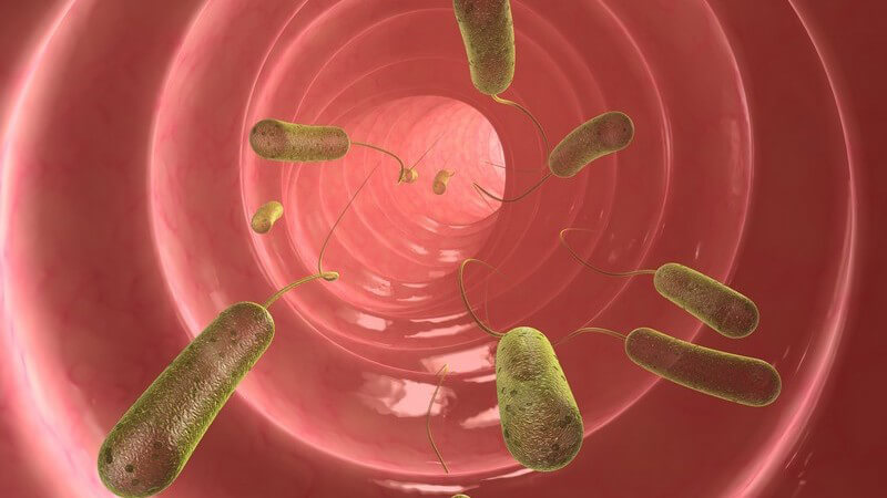 Grafik Darm mit Bakterien