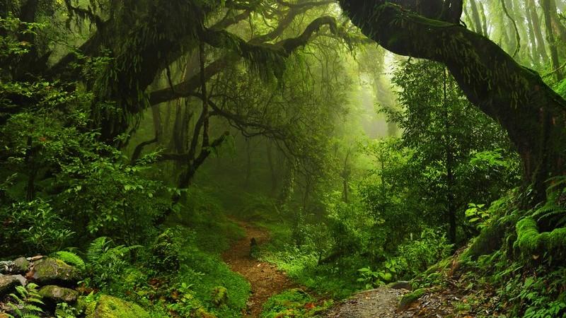 Blick entlang eines schmalen Pfades in einem düsteren und vernebelten Regenwald