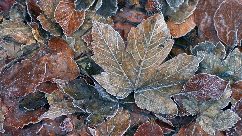 Braunes Herbstlaub
