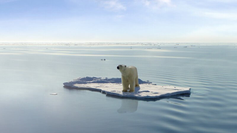 Eisbär auf Eisplatte im Wasser