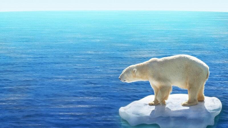 Eisbär auf Polareis, im Hintergrund Wasser, Polarmeer