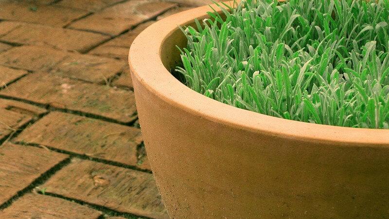 Blumentopf mit grüner Pflanze auf Terrassenboden