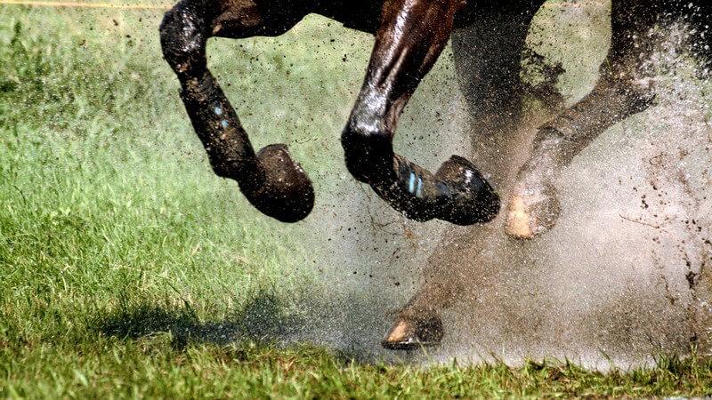 Galloppierende Pferdebeine auf Wiese mit Schlamm