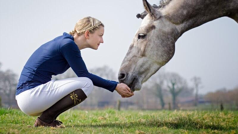 Reiterin mit geflochtenen Haaren kniet in der Hocke und füttert ihr Pferd