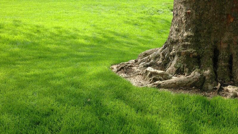 Grüne Wiese mit Baumstamm