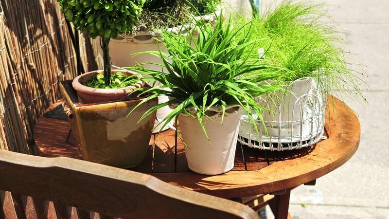 Grüne Pflanzen in Blumentöpfen auf Holztisch