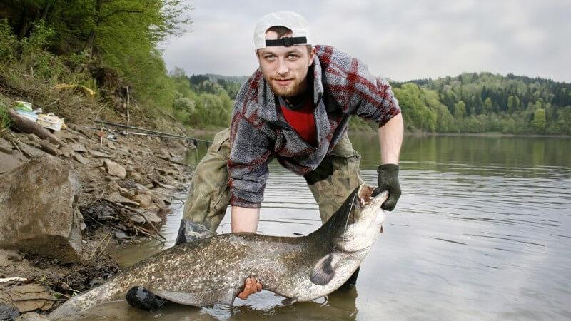 Junger Angler am Fluss hält großen Wels-Fisch in Händen