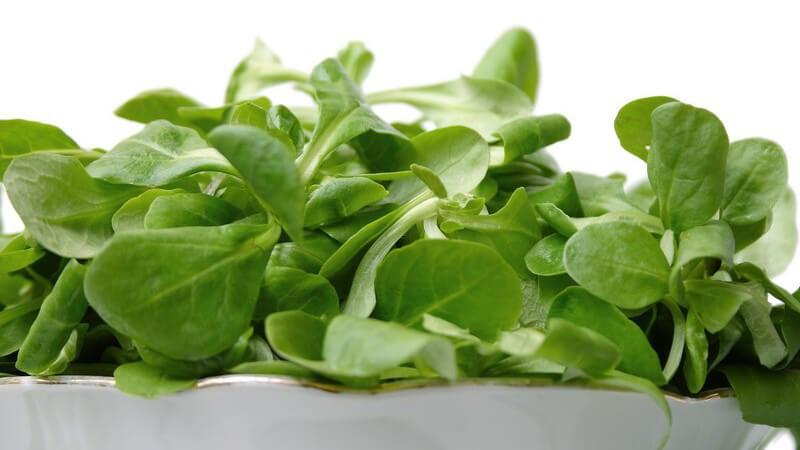 Frischer Feldsalat in weißer Schüssel