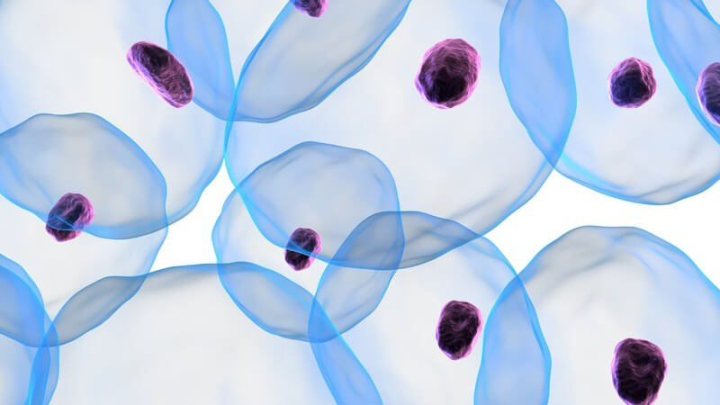 3D Grafik Zellen mit Zellkern