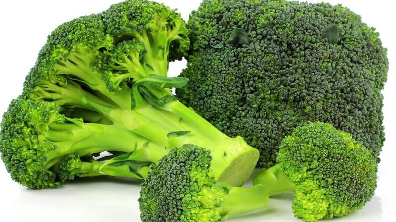 Große und kleine Brokkoli-Rösschen vor weißem Hintergrund