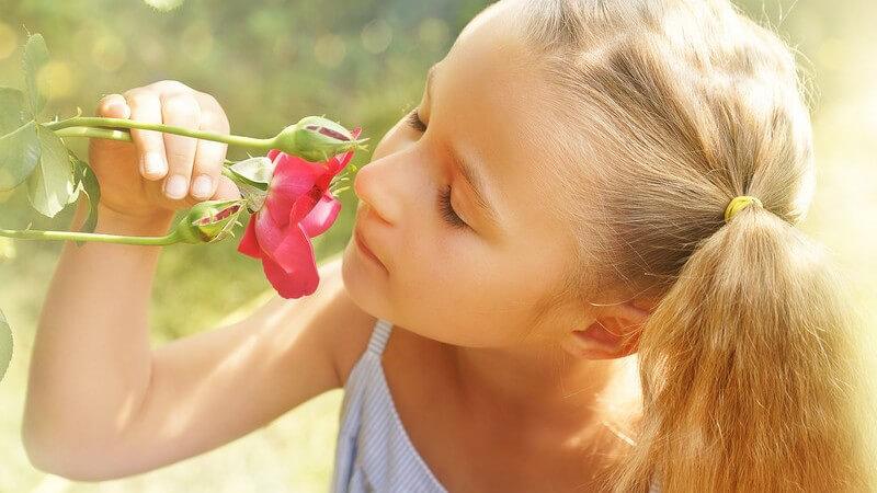 Mädchen mit Zöpfen riecht an einer Rose im Garten