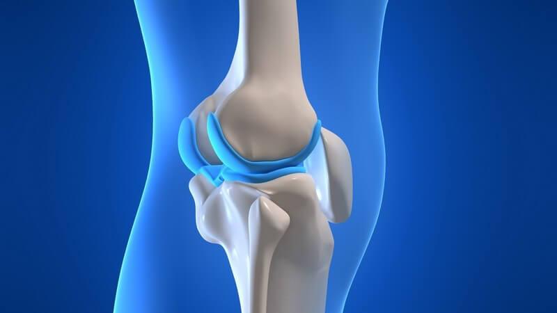 Anatomie - Grafik des menschlichen Knies