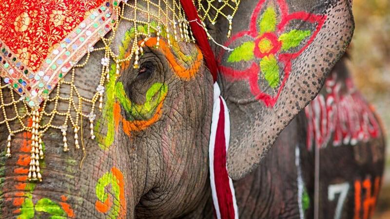 Farbig und kunstvoll angemalter Elefant mit Kopfschmuck
