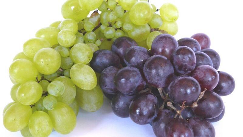 Grüne und rote Weintrauben