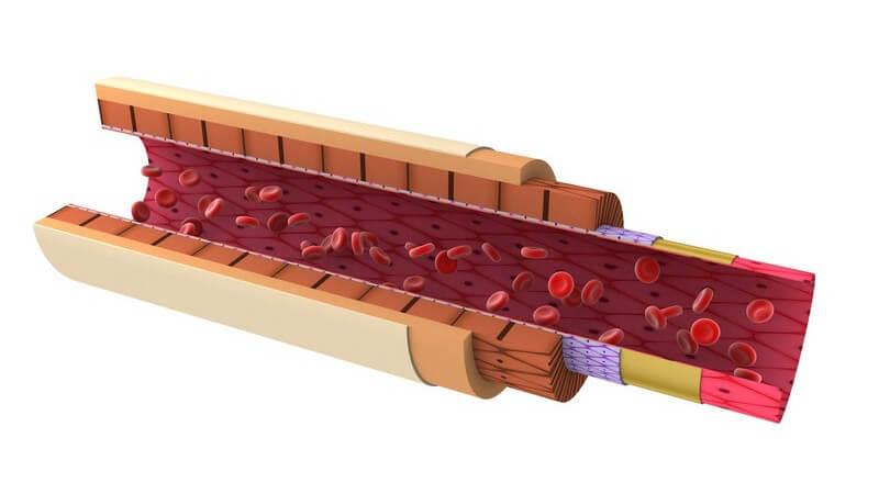 3D Grafik Arterie, aufgeschnitten mit Blutzellen auf weißem Hintergrund