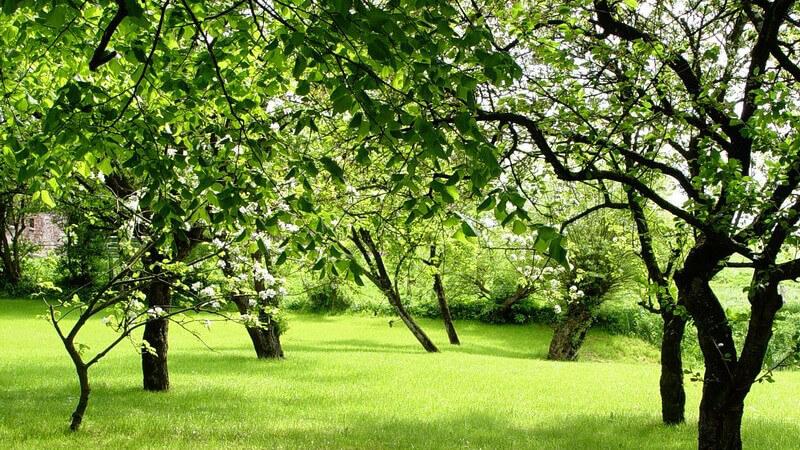 Grüne Wiese mit Obstbäumen im Sonnenlicht