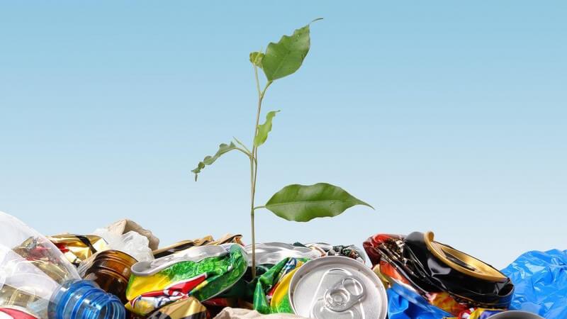 Haufen mit klein gedrückten Dosen und Flaschen, daraus wächst grüne Pflanze