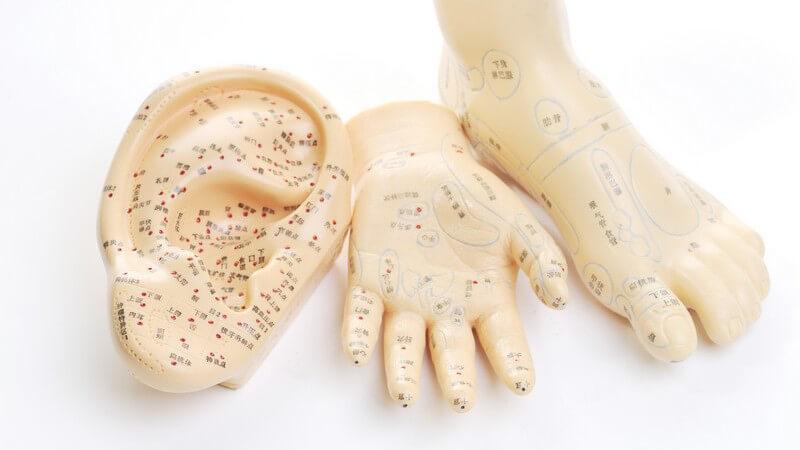 Modelle von Fuß, Hand und Ohr mit farblich markierten Akupunkturpunkten